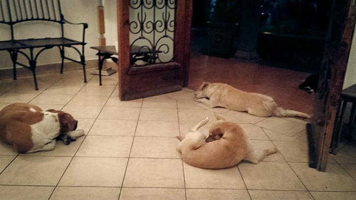 Cães_de_rua_vão_a_funeral_de_mulher_que_os_alimentava (2)