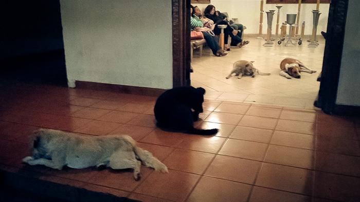 Cães_de_rua_vão_a_funeral_de_mulher_que_os_alimentava (3)