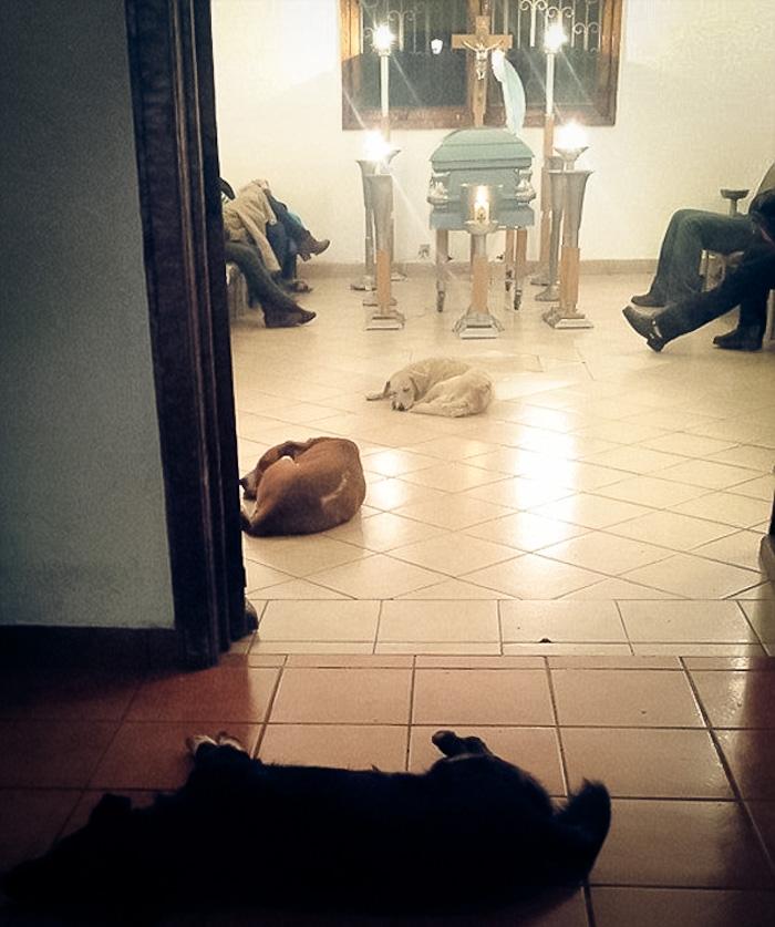 Cães_de_rua_vão_a_funeral_de_mulher_que_os_alimentava (4)