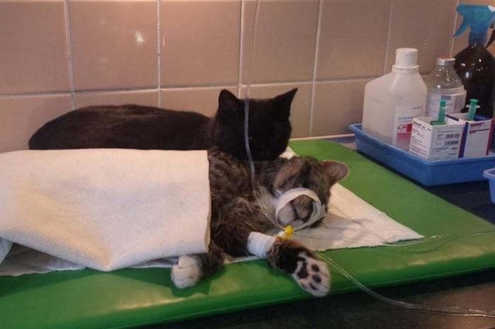 Conheça_o_gato_que_pensa_que_é_um_enfermeiro (1)
