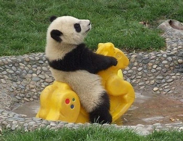 Estes animais são realmente engraçados (1)