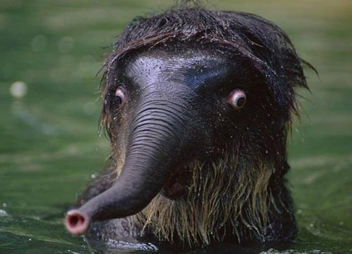 Estes animais são realmente engraçados (16)