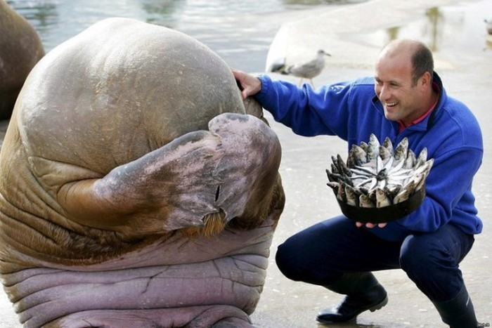 Estes animais são realmente engraçados (17)