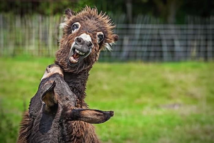Estes animais são realmente engraçados (2)