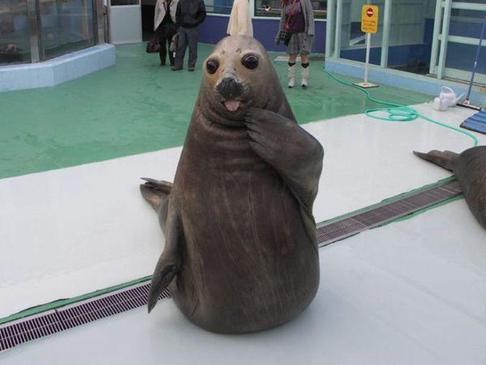 Estes animais são realmente engraçados (26)