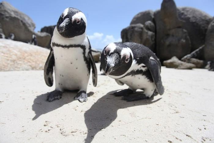 Estes animais são realmente engraçados (28)