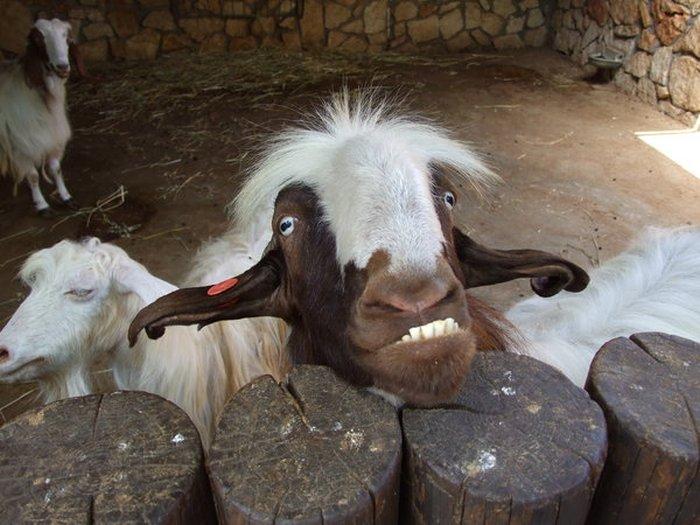 Estes animais são realmente engraçados (40)