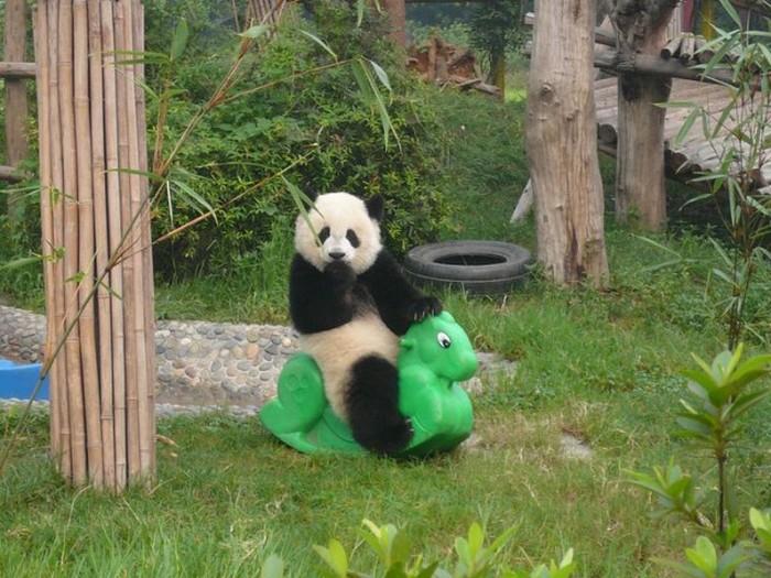 Estes animais são realmente engraçados (6)