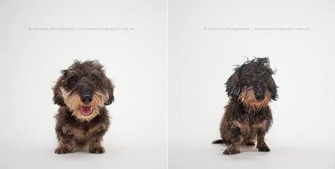 Fotos divertidas de cachorros antes e depois do banho (1)