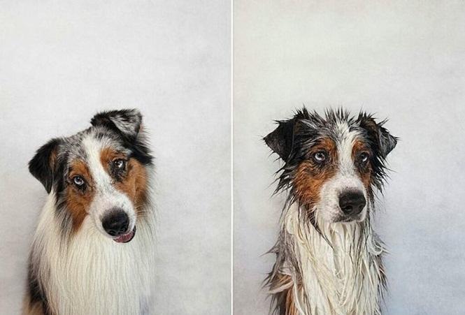 Fotos-divertidas-de-cachorros-antes-e-depois-do-banho (11)