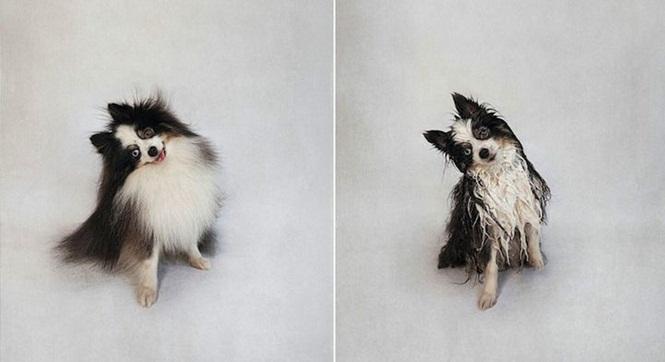 Fotos divertidas de cachorros antes e depois do banho (3)