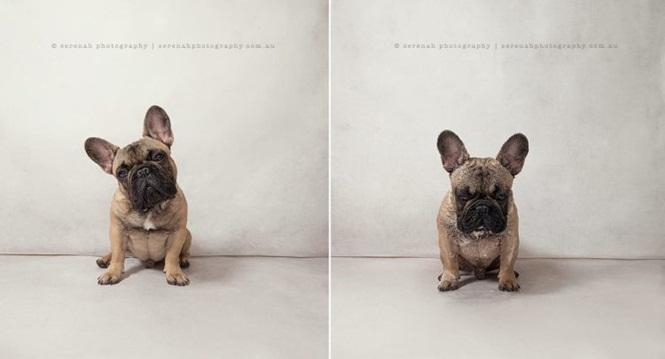 Fotos-divertidas-de-cachorros-antes-e-depois-do-banho (7)