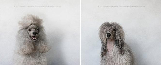 Fotos-divertidas-de-cachorros-antes-e-depois-do-banho (9)