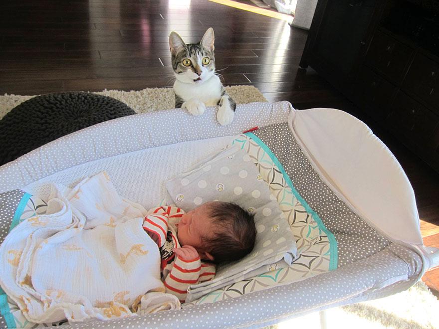 Gato-fica-surpreso-com-bebê-em-casa (1)