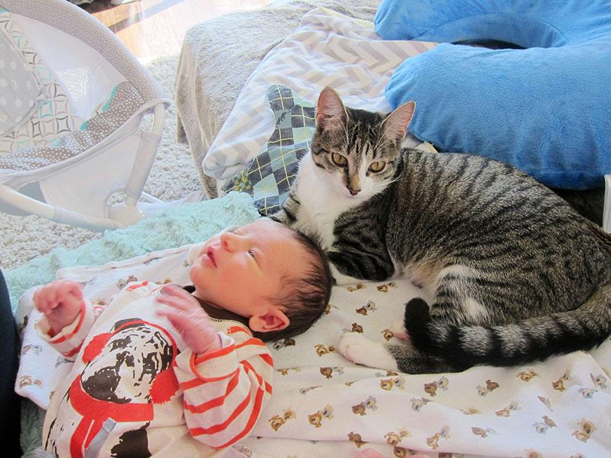 Gato-fica-surpreso-com-bebê-em-casa (2)