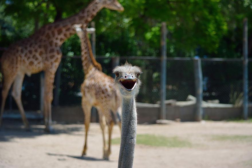 Os mais engraçados photobombs de animais (6)