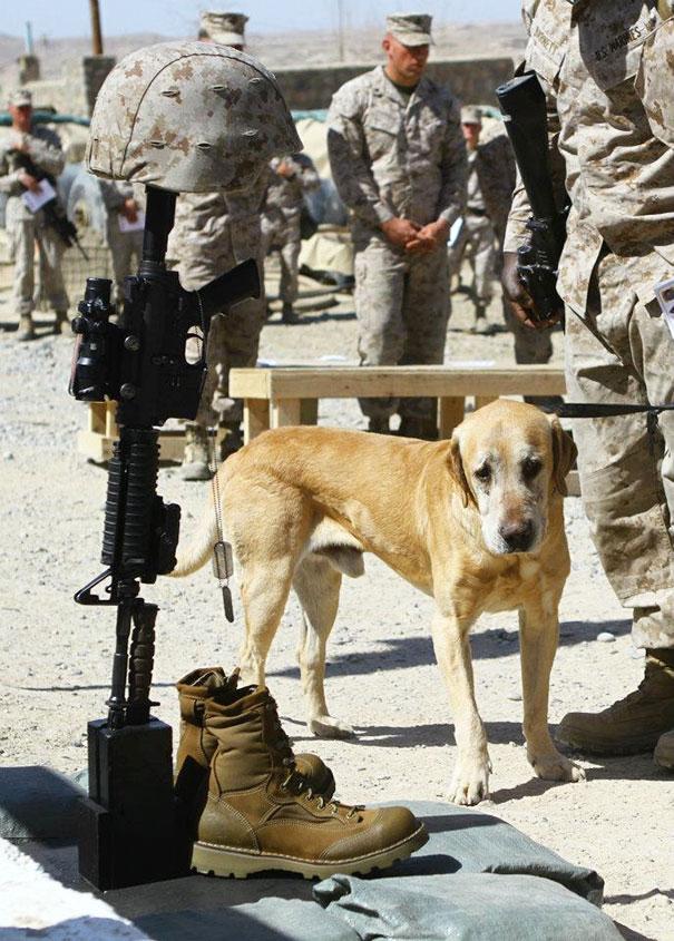 Soldados-e-animais-que-se-tornaram-melhore-amigos (12)