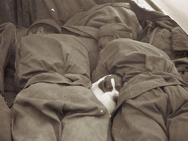 Soldados-e-animais-que-se-tornaram-melhore-amigos (16)