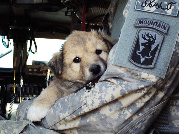 Soldados-e-animais-que-se-tornaram-melhore-amigos (6)