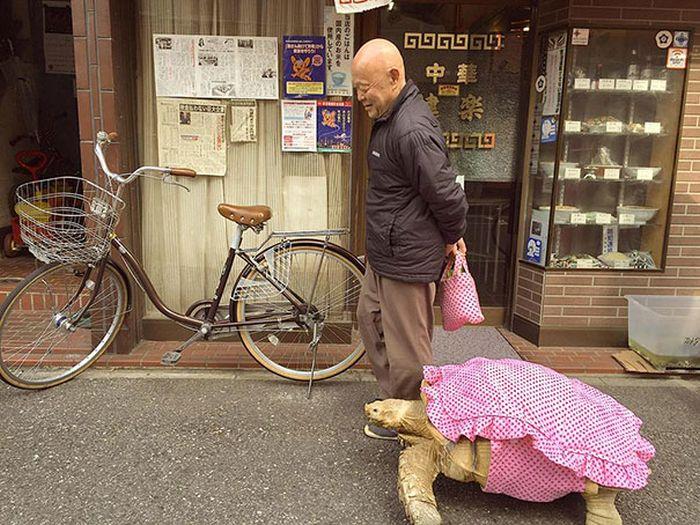 Tartaruga gigante de estimação andando pelas ruas de Tóquio (3)