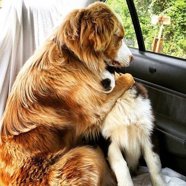 Amizade-entre-cães-Cachorros-que-são-amigos-inseparáveis (1)