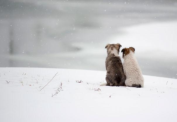Amizade-entre-cães-Cachorros-que-são-amigos-inseparáveis (10)