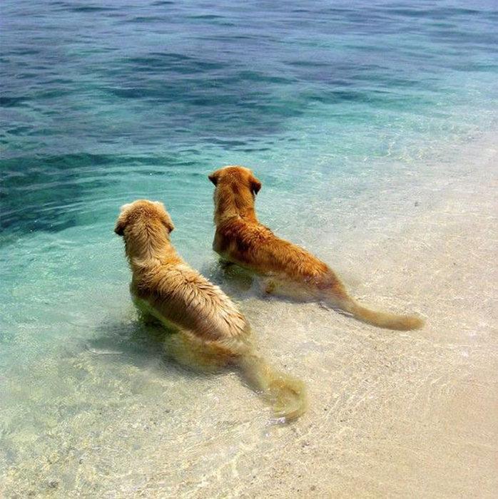 Amizade-entre-cães-Cachorros-que-são-amigos-inseparáveis (11)