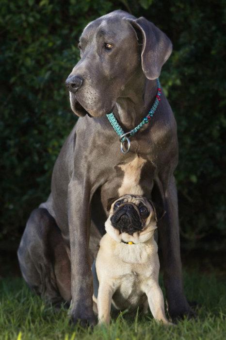 Amizade-entre-cães-Cachorros-que-são-amigos-inseparáveis (17)