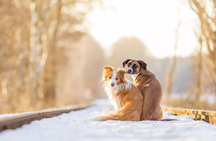 Amizade-entre-cães-Cachorros-que-são-amigos-inseparáveis (19)