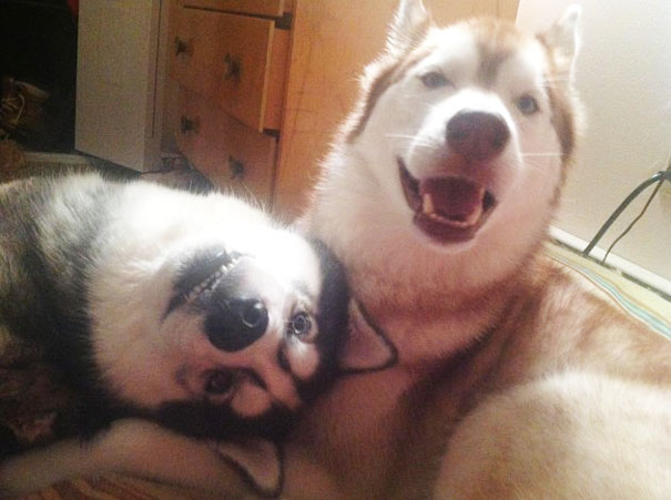 Amizade-entre-cães-Cachorros-que-são-amigos-inseparáveis (2)