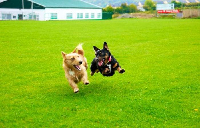 Amizade-entre-cães-Cachorros-que-são-amigos-inseparáveis (21)