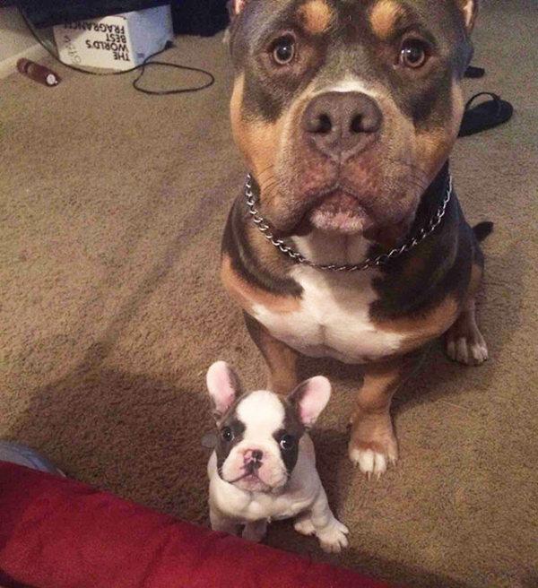 Amizade-entre-cães-Cachorros-que-são-amigos-inseparáveis (24)
