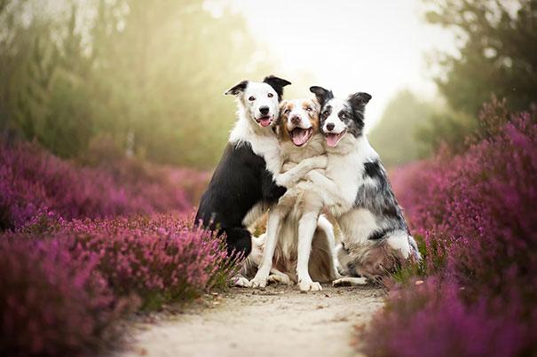 Amizade-entre-cães-Cachorros-que-são-amigos-inseparáveis (4)