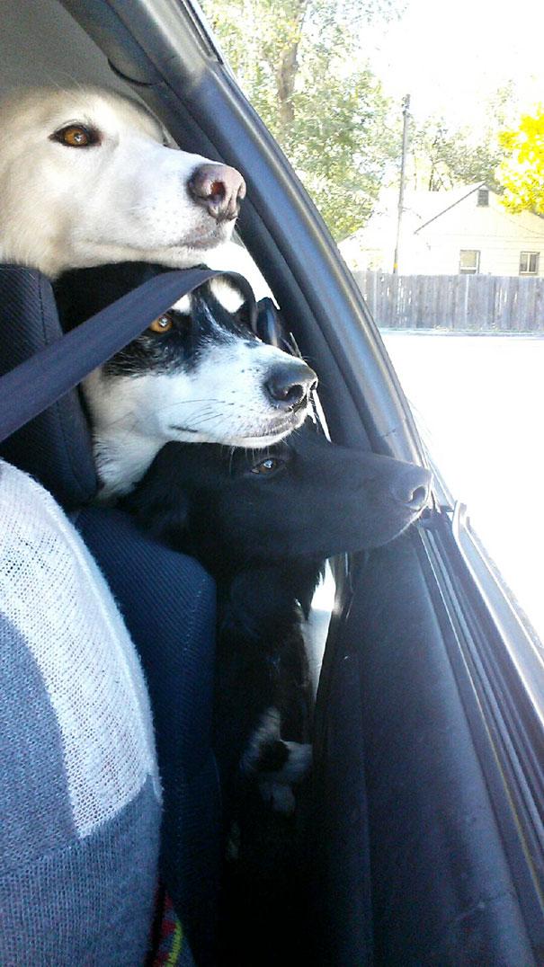 Amizade-entre-cães-Cachorros-que-são-amigos-inseparáveis (5)