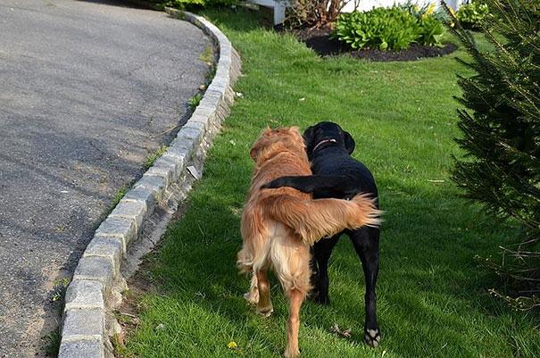 Amizade-entre-cães-Cachorros-que-são-amigos-inseparáveis (7)