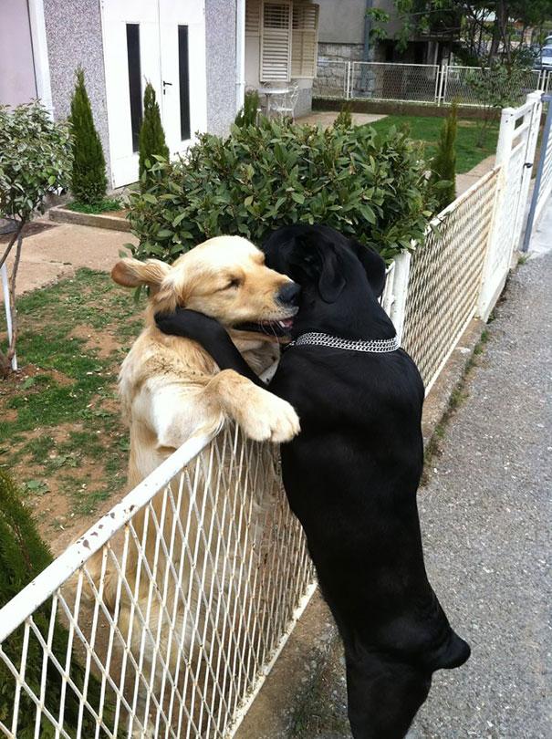 Amizade-entre-cães-Cachorros-que-são-amigos-inseparáveis (9)