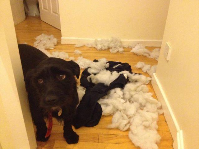 14 Cachorros que se entregaram só pela cara de arrependimento depois de aprontarem