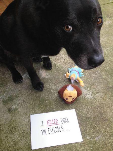 Cachorrosque-se-entregaram-só-pela-cara  (3)