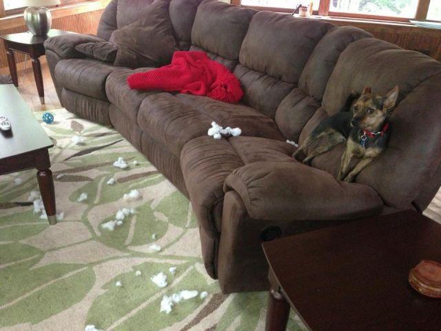 Cachorrosque-se-entregaram-só-pela-cara  (4)