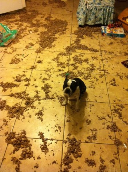 Cachorrosque-se-entregaram-só-pela-cara  (8)