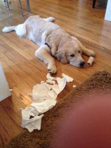 Cachorrosque-se-entregaram-só-pela-cara  (9)