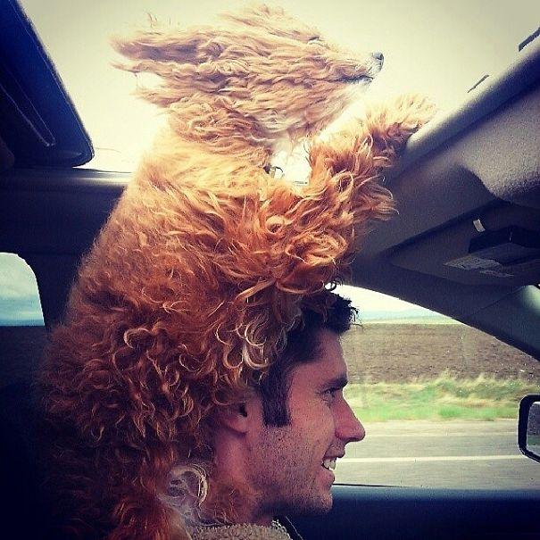 Cães engraçados que amam passear de carro (1)