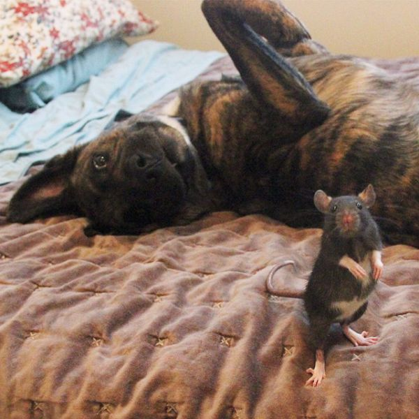 Cão e ratinho se tornam melhores amigos