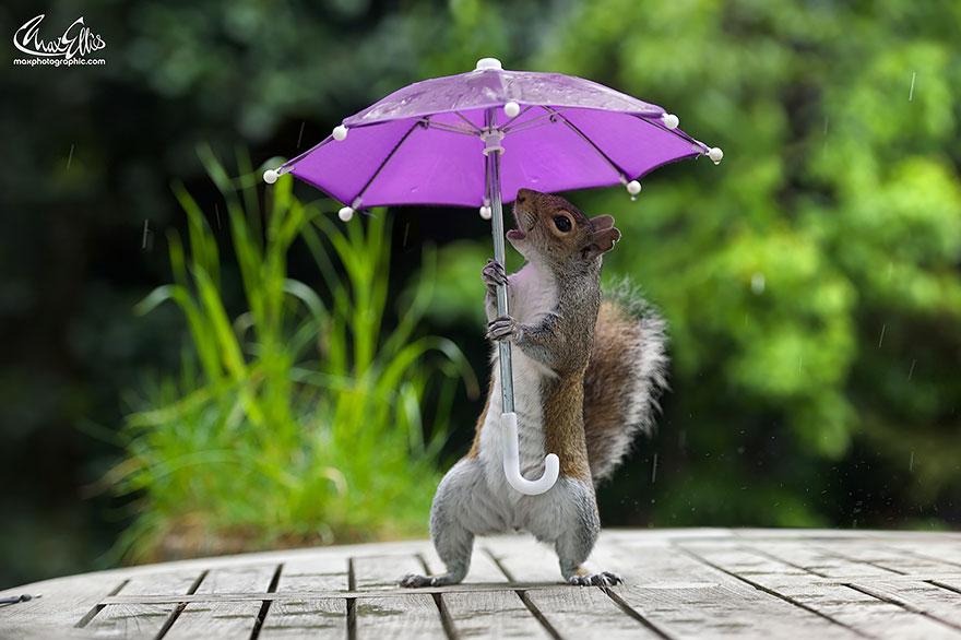 Esquilo ganha um sombrinha minúscula para se proteger da chuva  (2)