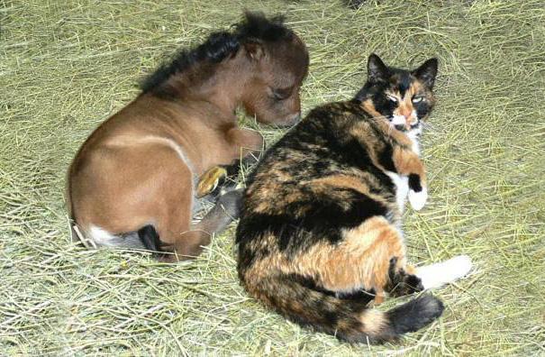 Esses mini cavalos são as criaturas mais fofas do mundo (11)
