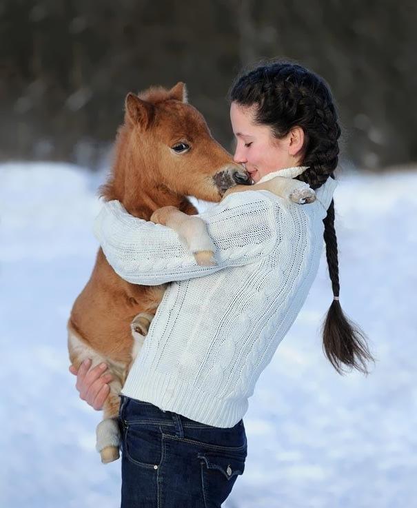 Esses mini cavalos são as criaturas mais fofas do mundo (4)
