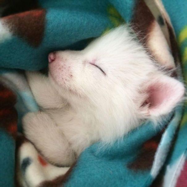 Esta é a bebê raposa mais dorminhoca de todas (1)