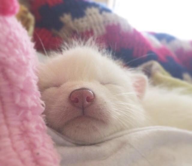 Esta é a bebê raposa mais dorminhoca de todas (11)