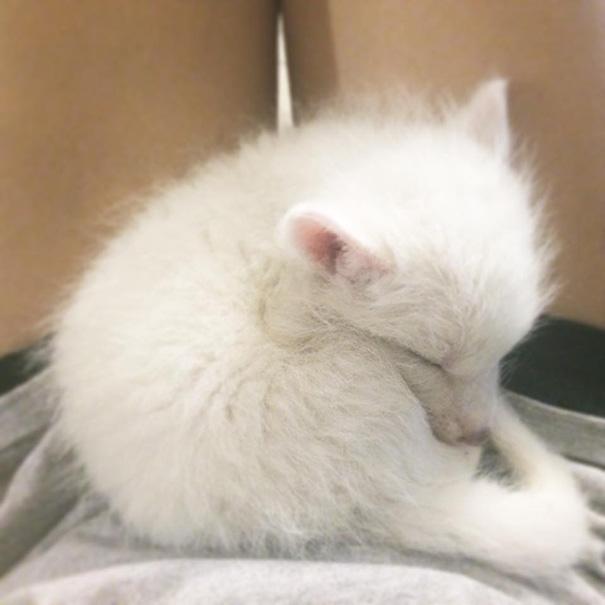 Esta é a bebê raposa mais dorminhoca de todas (14)