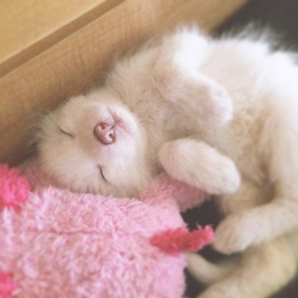 Esta é a bebê raposa mais dorminhoca de todas (3)